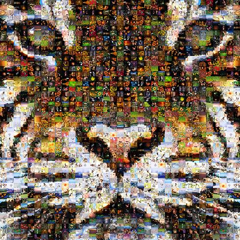 img_sample_tiger